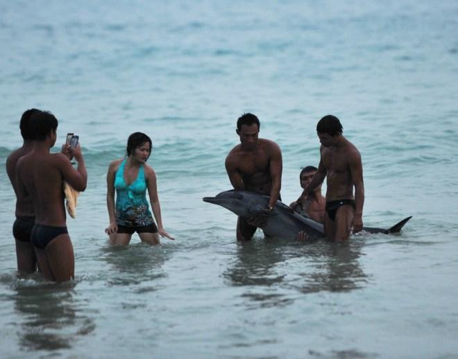 golfinho 1