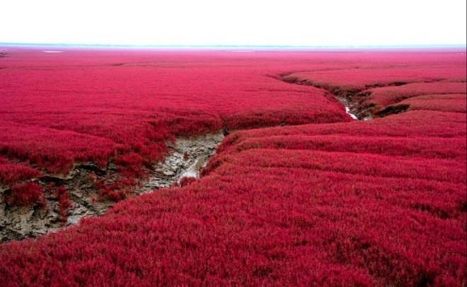 praia vermelha 6