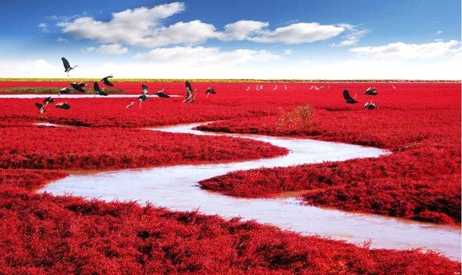 praia vermelha 7