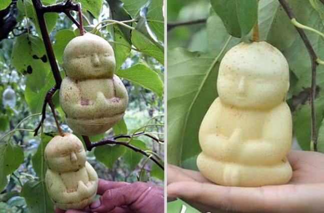 Pera Buda 3