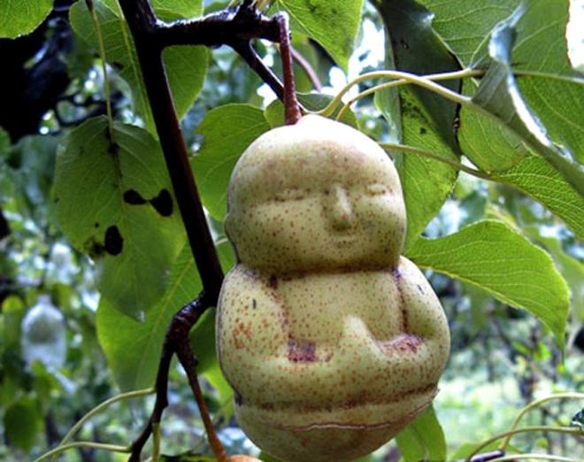 Pera Buda 4