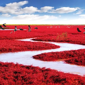 #Praia Vermelha, Panjin